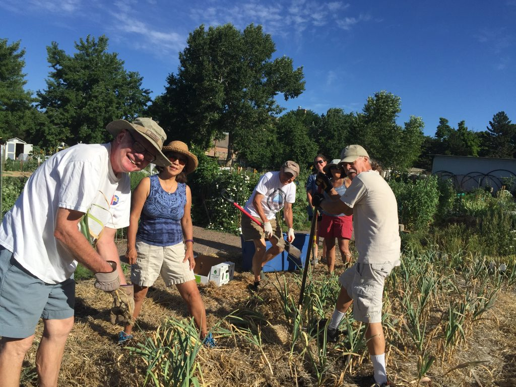 Tom H., Helen B., Dennis H., Sissy L., Lara D., and Richard C. are rockin' Garlic Harvest 2016