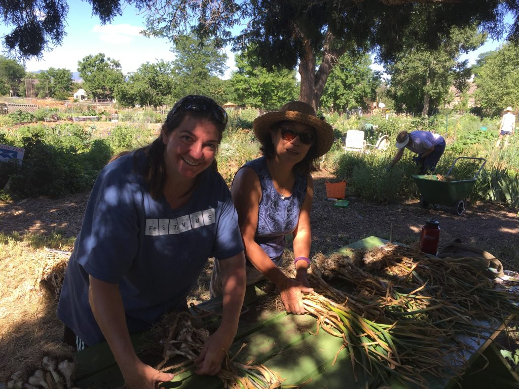 Sissy L. and Helen B. bundling and tagging garlic before it goes to Amy's garage to cure for the next 4 to 6 weeks.